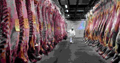 Aduana denunció a 19 frigoríficos por operaciones fraudulentas en exportaciones